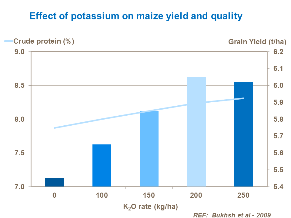 Effect of potassium on maize yield and quality