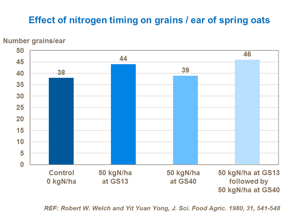 Effect of nitrogen timing on grains  ear of spring oats