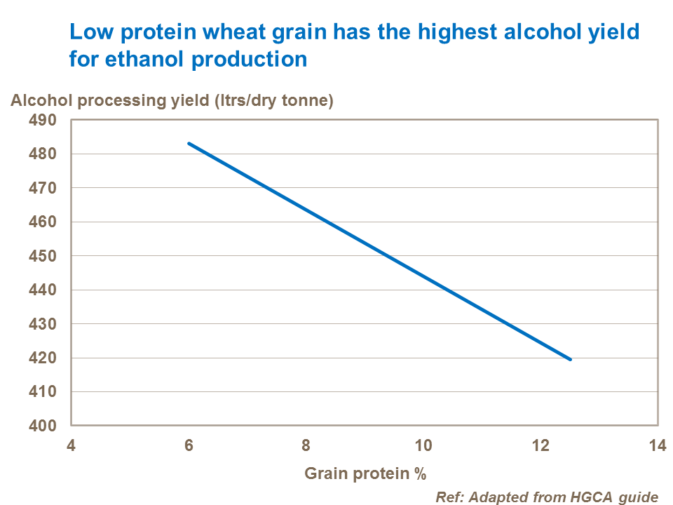 Low protein wheat grain has the highest alcohol yield for ethanol production
