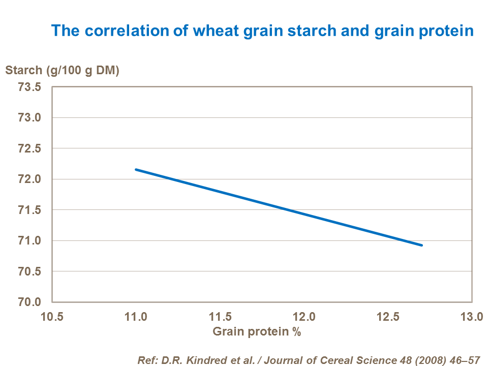 The correlation of wheat grain starch and grain protein
