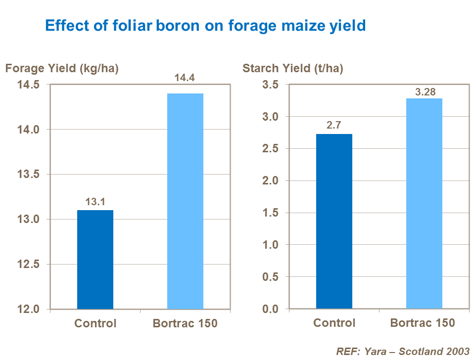 Effect of foliar boron on forage maize yield
