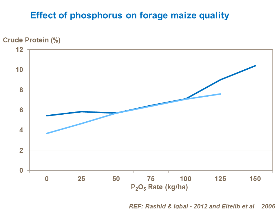 Effect of phosphorus on forage maize quality