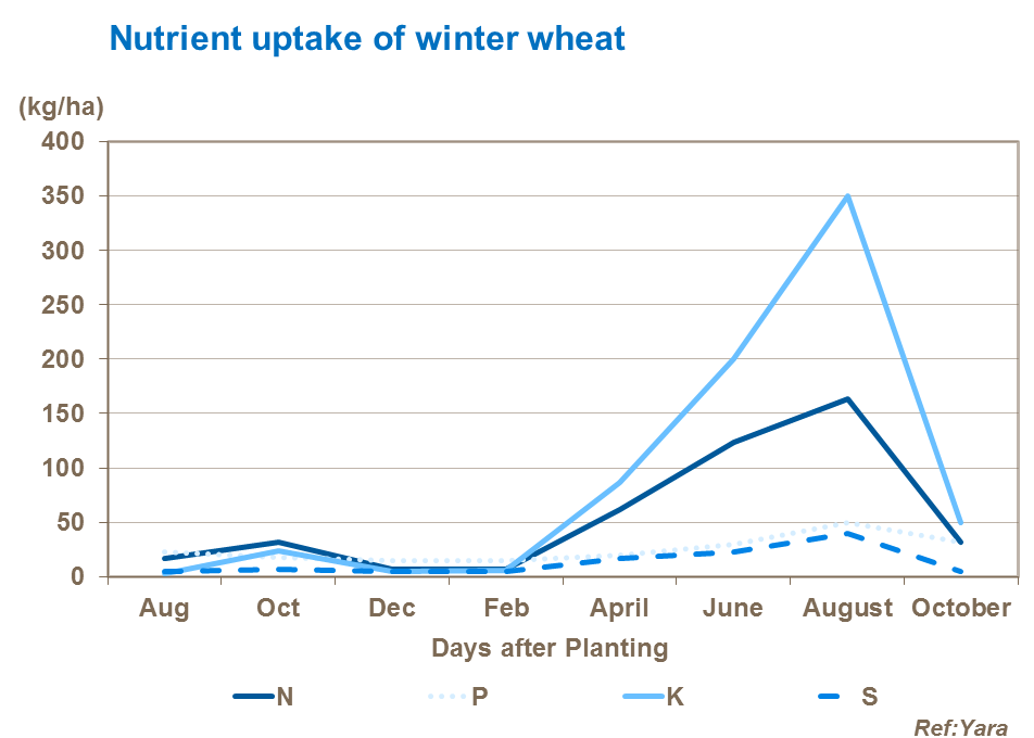 Nutrient uptake graph of winter wheat