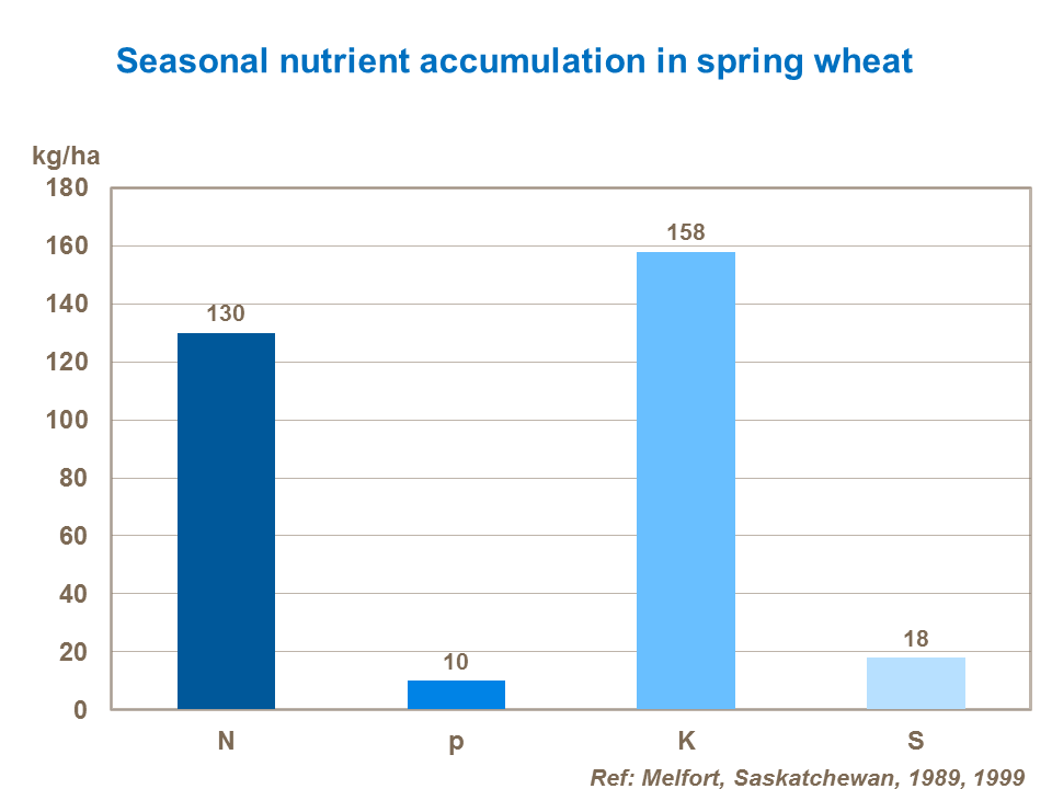 Nutrient accumulation in spring wheat